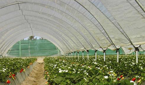 Cintas para la protección de los plásticos en invernaderos