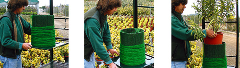 Maquinaria para embalar planta ornamental